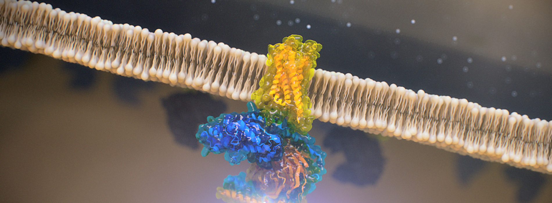G-Protein Coupled Receptor, from Random42